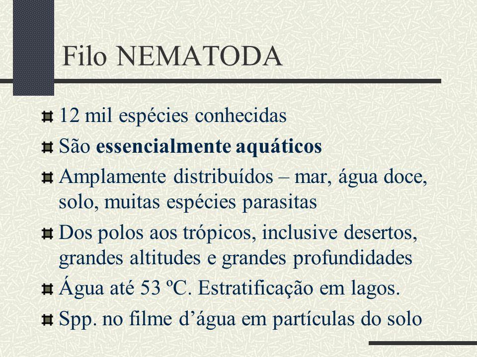 Filo NEMATODA 12 mil espécies conhecidas São essencialmente aquáticos Amplamente distribuídos – mar, água doce, solo, muitas espécies parasitas Dos po