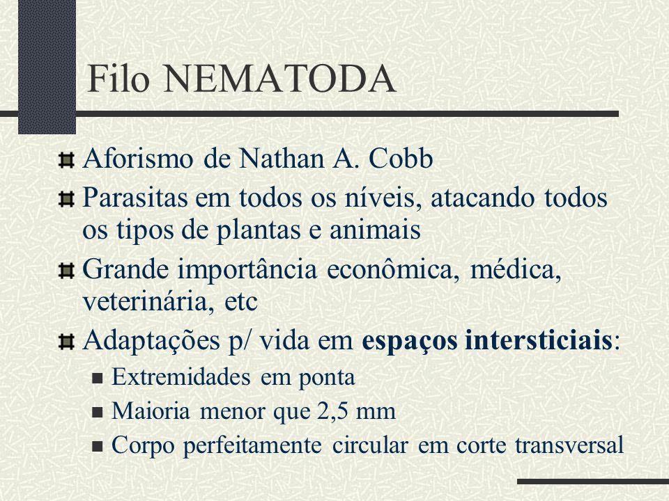 Filo NEMATODA Aforismo de Nathan A. Cobb Parasitas em todos os níveis, atacando todos os tipos de plantas e animais Grande importância econômica, médi