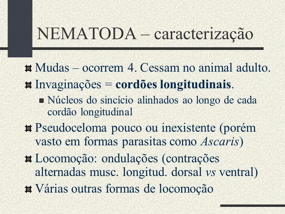 NEMATODA – caracterização Mudas – ocorrem 4. Cessam no animal adulto. Invaginações = cordões longitudinais. Núcleos do sincício alinhados ao longo de