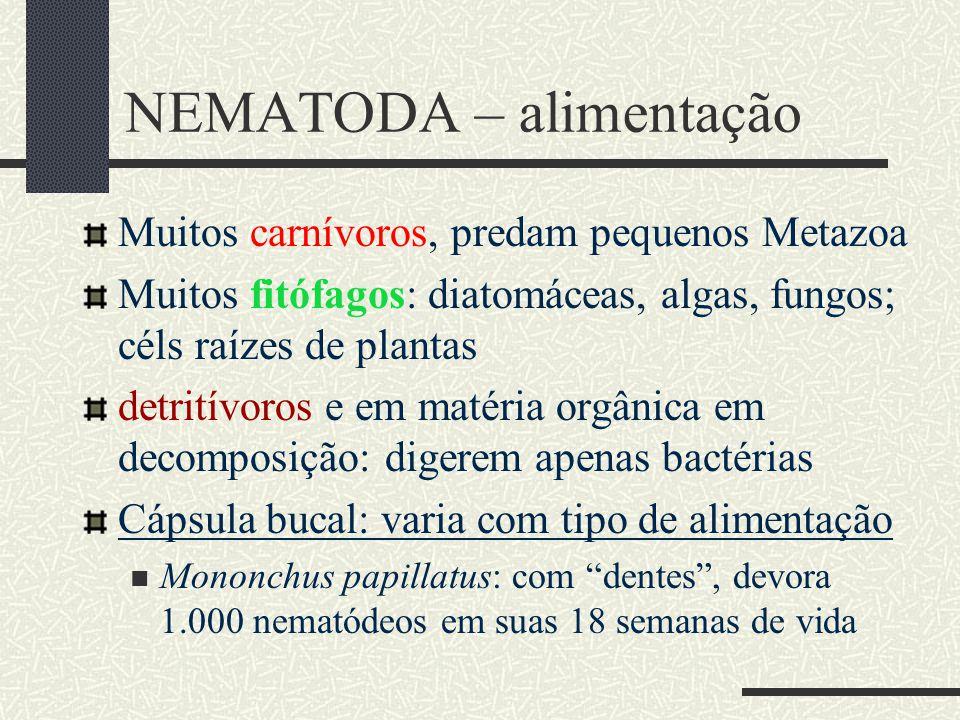 NEMATODA – alimentação Muitos carnívoros, predam pequenos Metazoa Muitos fitófagos: diatomáceas, algas, fungos; céls raízes de plantas detritívoros e