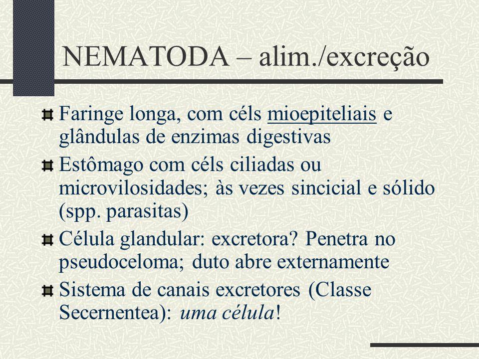 NEMATODA – alim./excreção Faringe longa, com céls mioepiteliais e glândulas de enzimas digestivas Estômago com céls ciliadas ou microvilosidades; às v
