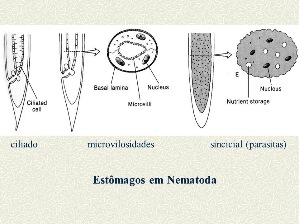 Estômagos em Nematoda ciliado microvilosidades sincicial (parasitas)