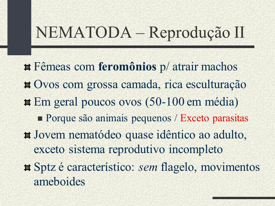 NEMATODA – Reprodução II Fêmeas com feromônios p/ atrair machos Ovos com grossa camada, rica esculturação Em geral poucos ovos (50-100 em média) Porqu