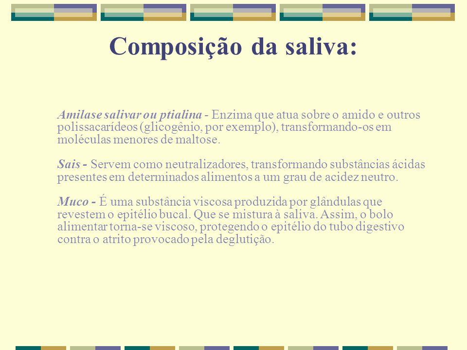 Composição da saliva: Amilase salivar ou ptialina - Enzima que atua sobre o amido e outros polissacarídeos (glicogênio, por exemplo), transformando-os