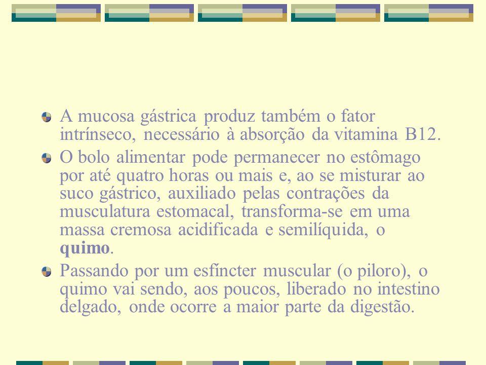 A mucosa gástrica produz também o fator intrínseco, necessário à absorção da vitamina B12. O bolo alimentar pode permanecer no estômago por até quatro