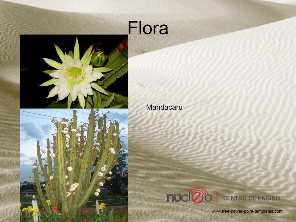 Flora Mandacaru