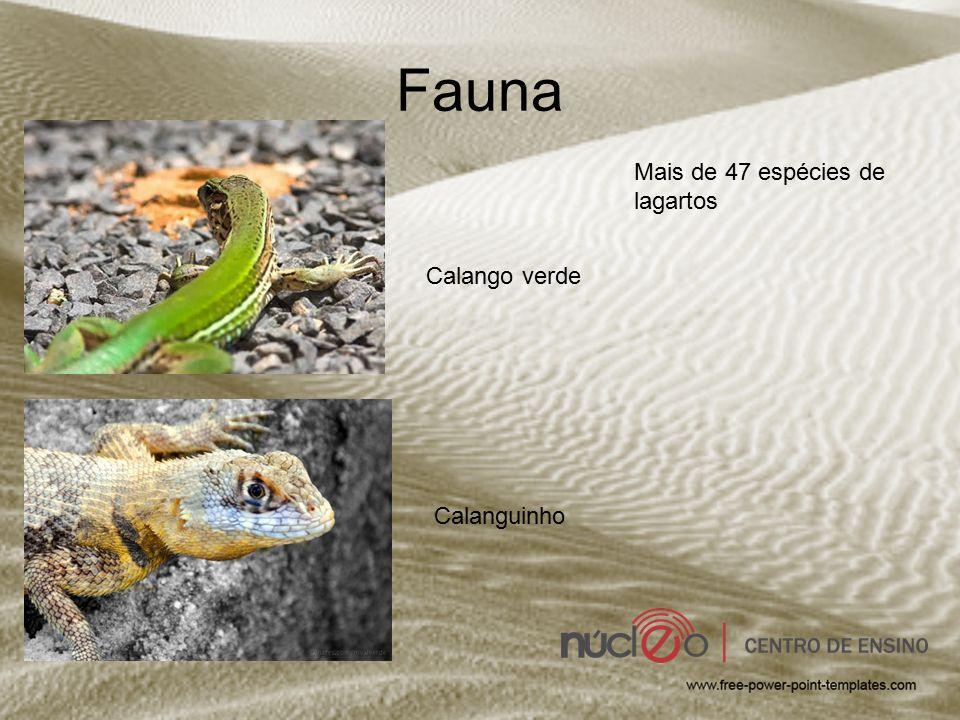 Fauna Calango verde Mais de 47 espécies de lagartos Calanguinho