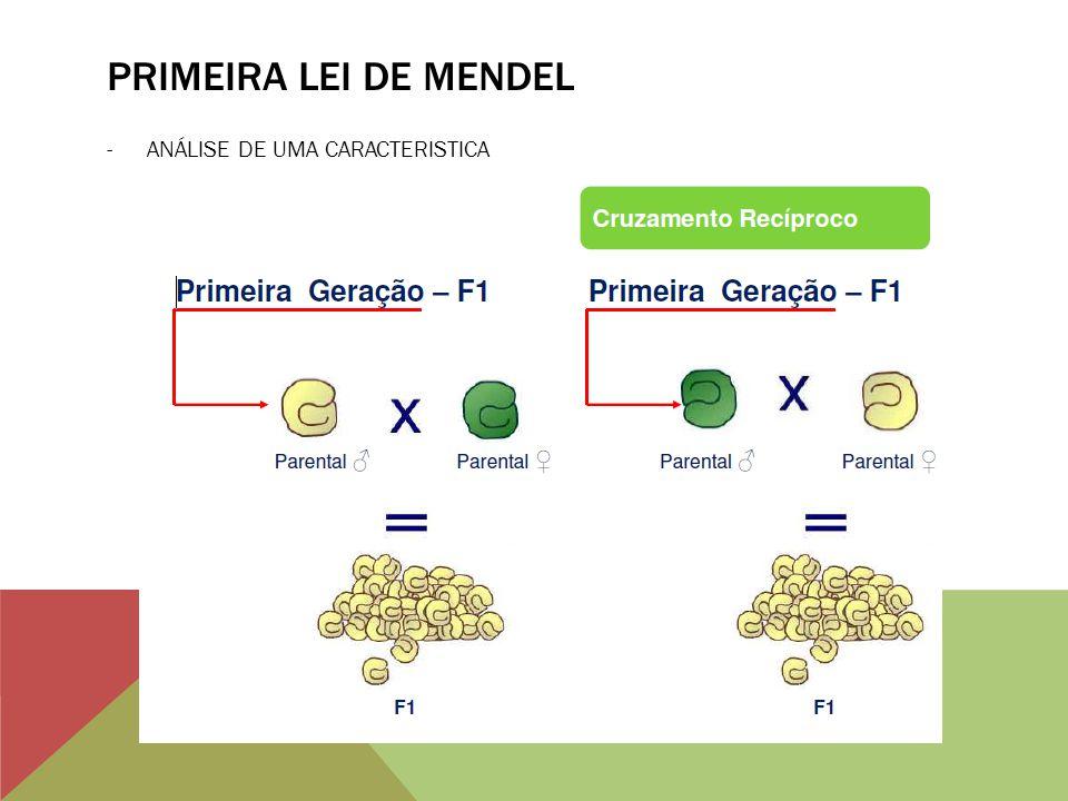 PRIMEIRA LEI DE MENDEL -ANÁLISE DE UMA CARACTERISTICA