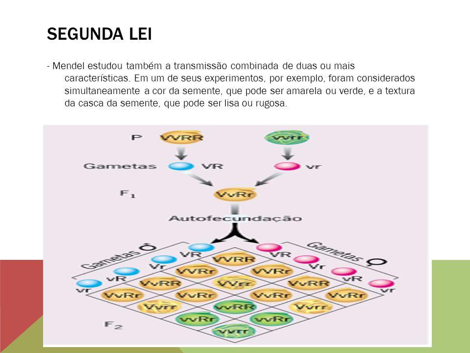 SEGUNDA LEI - Mendel estudou também a transmissão combinada de duas ou mais características. Em um de seus experimentos, por exemplo, foram considerad
