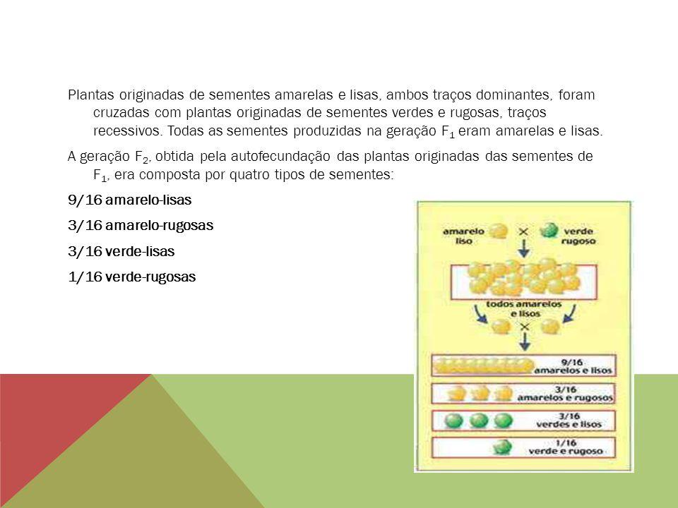 Plantas originadas de sementes amarelas e lisas, ambos traços dominantes, foram cruzadas com plantas originadas de sementes verdes e rugosas, traços r