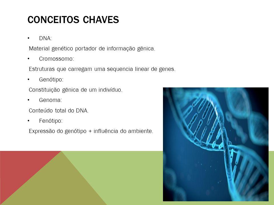 CONCEITOS CHAVES DNA: Material genético portador de informação gênica. Cromossomo: Estruturas que carregam uma sequencia linear de genes. Genótipo: Co