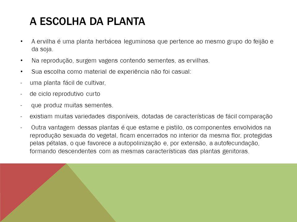 A ESCOLHA DA PLANTA A ervilha é uma planta herbácea leguminosa que pertence ao mesmo grupo do feijão e da soja. Na reprodução, surgem vagens contendo