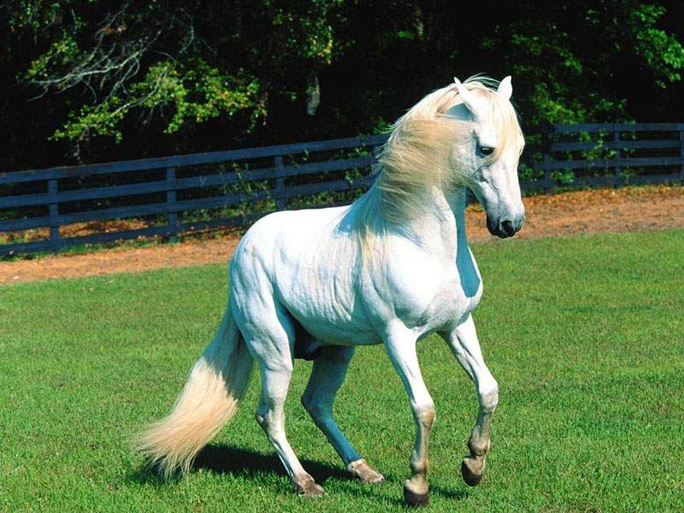 Depois ela voltou para a sua casinha bem pequena e voltou a dormir. Então, quando ela acordou, ela tinha virado um lindo cavalo branco e disse: - Ah,