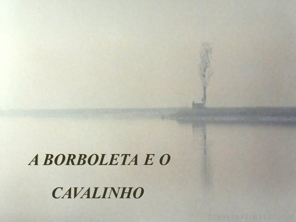 A BORBOLETA E O CAVALINHO A BORBOLETA E O CAVALINHO
