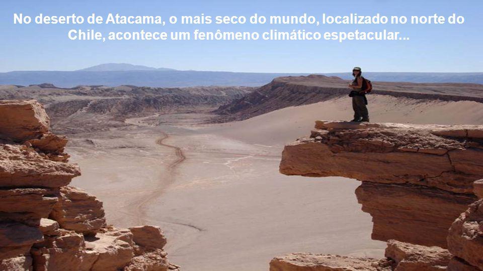 No deserto de Atacama, o mais seco do mundo, localizado no norte do Chile, acontece um fenômeno climático espetacular...