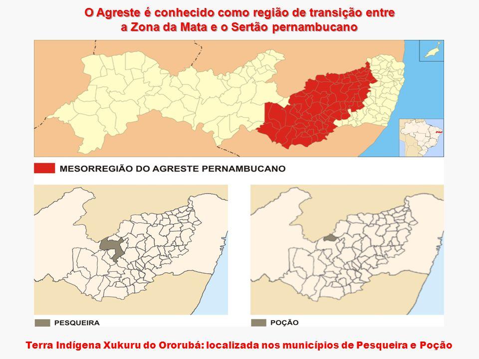 O Agreste é conhecido como região de transição entre a Zona da Mata e o Sertão pernambucano Terra Indígena Xukuru do Ororubá: localizada nos municípios de Pesqueira e Poção