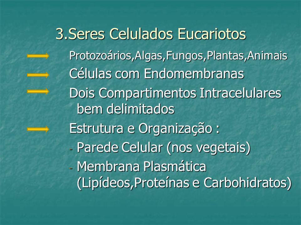 Citoplasma ( microcompartimentos ): Citosol Citoplasma ( microcompartimentos ): Citosol Citoesqueleto Citoesqueleto Organelas Organelas Núcleo : - Envelope Nuclear - Carioplasma - Carioplasma - Nucléolo - Nucléolo - Cromatina (DNA + Proteínas )na Interfase - Cromatina (DNA + Proteínas )na Interfase - Cromossomos na MITOSE /MEIOSE - Cromossomos na MITOSE /MEIOSE