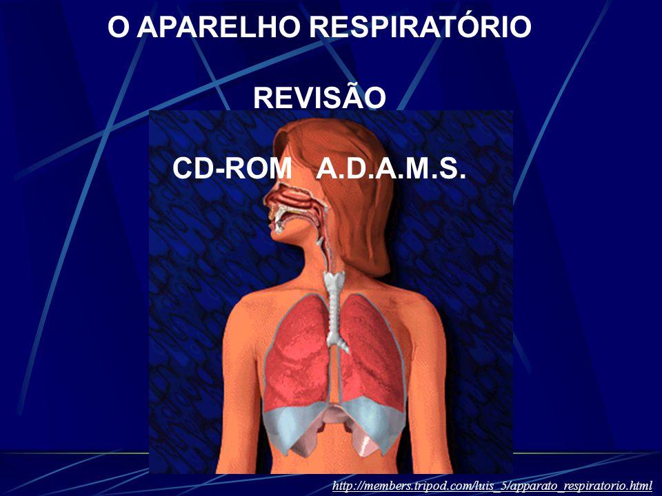O APARELHO RESPIRATÓRIO REVISÃO CD-ROM A.D.A.M.S. http://members.tripod.com/luis_5/apparato_respiratorio.html