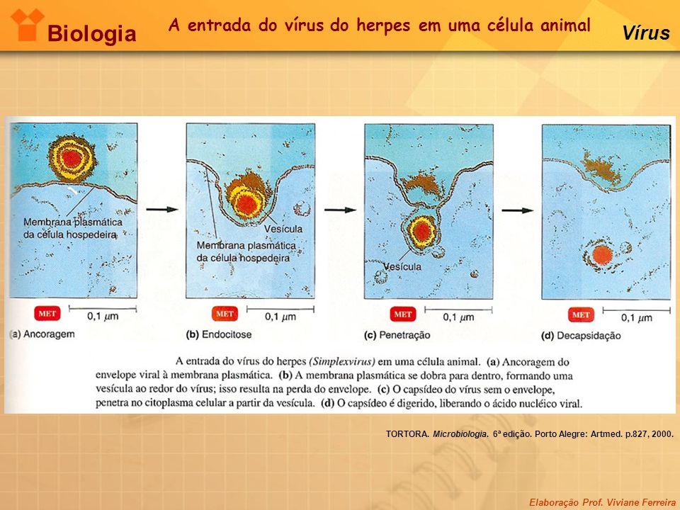 Elaboração Prof. Viviane Ferreira Biologia Vírus TORTORA. Microbiologia. 6ª edição. Porto Alegre: Artmed. p.827, 2000. A entrada do vírus do herpes em