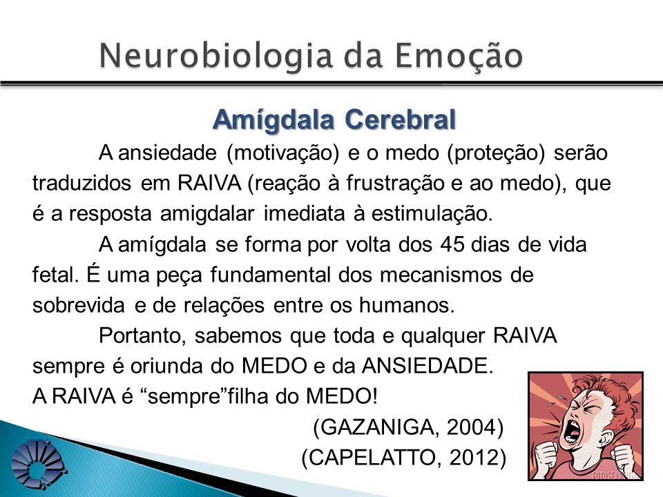 A ansiedade (motivação) e o medo (proteção) serão traduzidos em RAIVA (reação à frustração e ao medo), que é a resposta amigdalar imediata à estimulação.