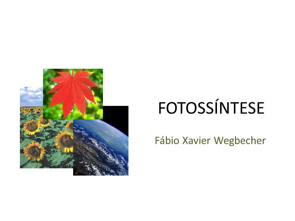 FOTOSSÍNTESE Fábio Xavier Wegbecher