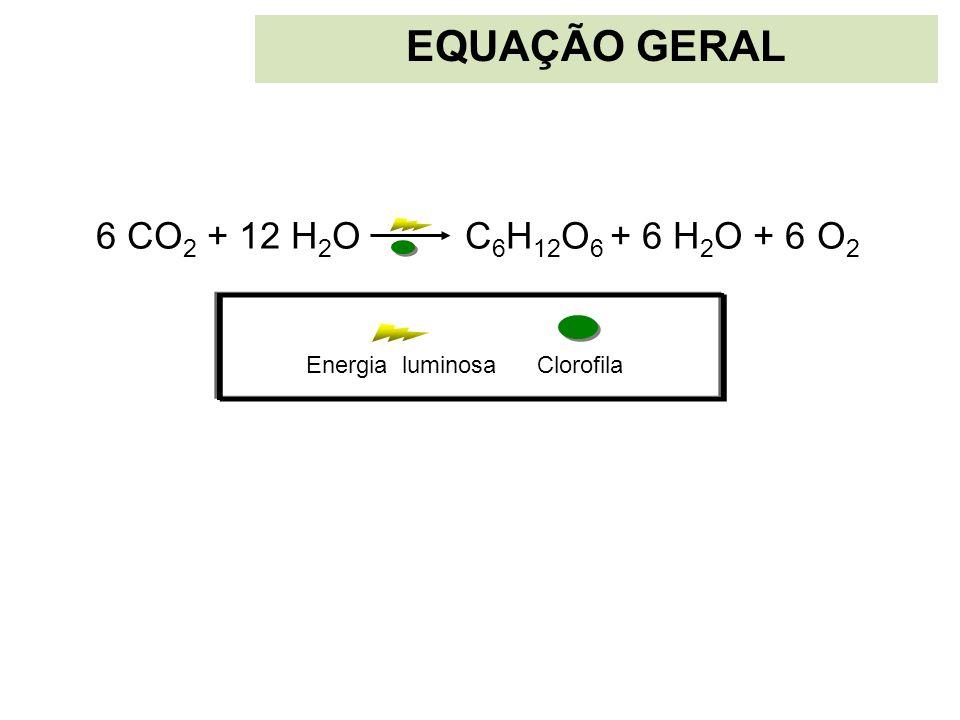 EQUAÇÃO GERAL 6 CO 2 + 12 H 2 O C 6 H 12 O 6 + 6 H 2 O + 6 O 2 ClorofilaEnergia luminosa