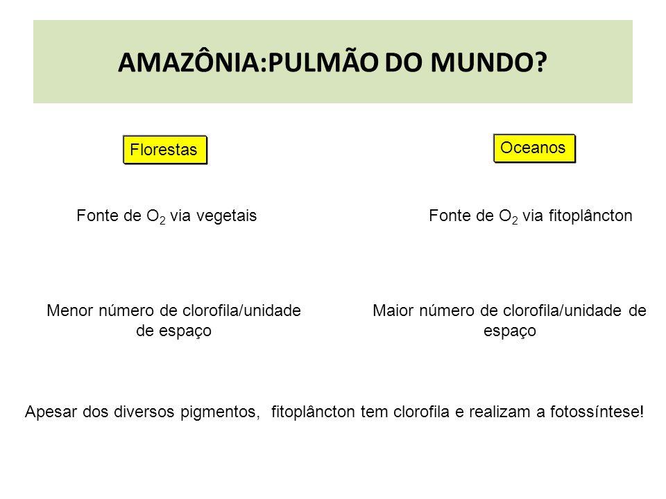 AMAZÔNIA:PULMÃO DO MUNDO? Apesar dos diversos pigmentos, fitoplâncton tem clorofila e realizam a fotossíntese! Maior número de clorofila/unidade de es