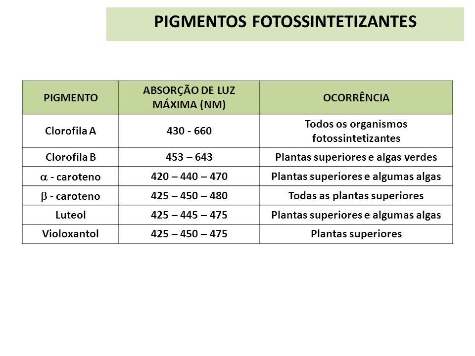 PIGMENTOS FOTOSSINTETIZANTES PIGMENTO ABSORÇÃO DE LUZ MÁXIMA (NM) OCORRÊNCIA Clorofila A430 - 660 Todos os organismos fotossintetizantes Clorofila B45