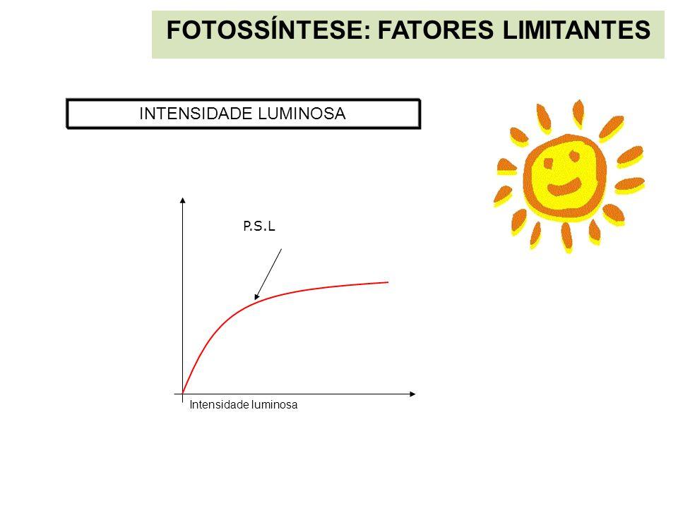 FOTOSSÍNTESE: FATORES LIMITANTES INTENSIDADE LUMINOSA Intensidade luminosa P.S.L