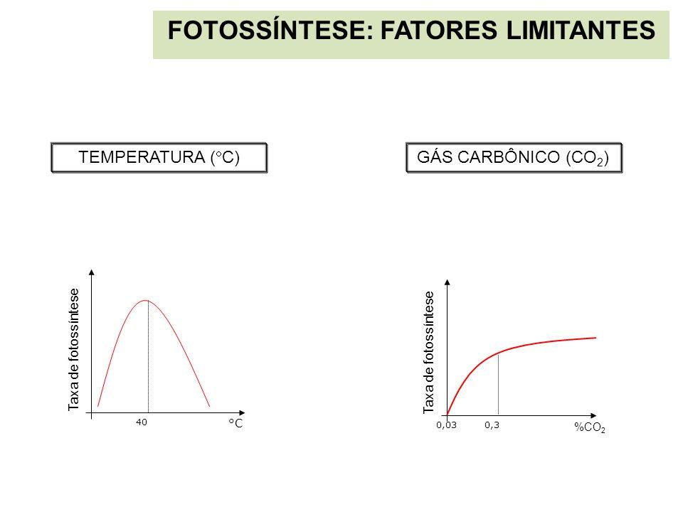 FOTOSSÍNTESE: FATORES LIMITANTES Taxa de fotossíntese %CO 2 0,03 0,3 °C 40 Taxa de fotossíntese GÁS CARBÔNICO (CO 2 ) TEMPERATURA (  C)