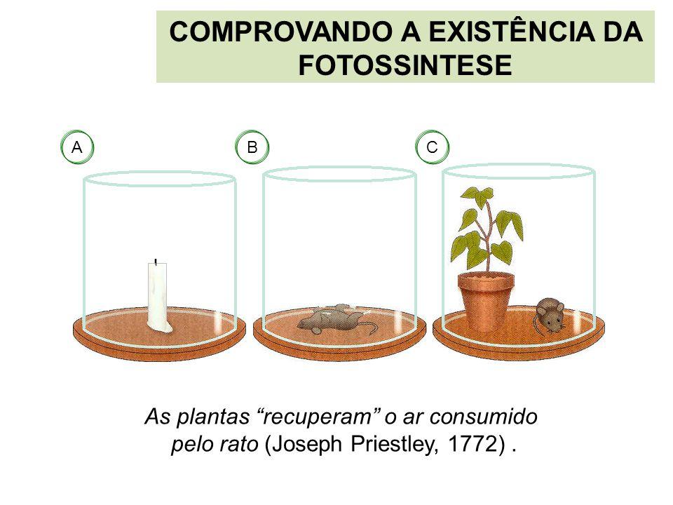 """COMPROVANDO A EXISTÊNCIA DA FOTOSSINTESE As plantas """"recuperam"""" o ar consumido pelo rato (Joseph Priestley, 1772). ABC"""