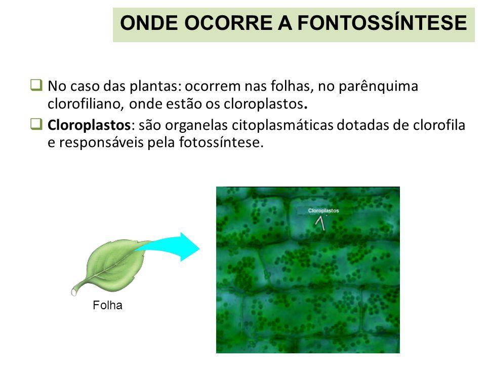  No caso das plantas: ocorrem nas folhas, no parênquima clorofiliano, onde estão os cloroplastos.  Cloroplastos: são organelas citoplasmáticas dotad