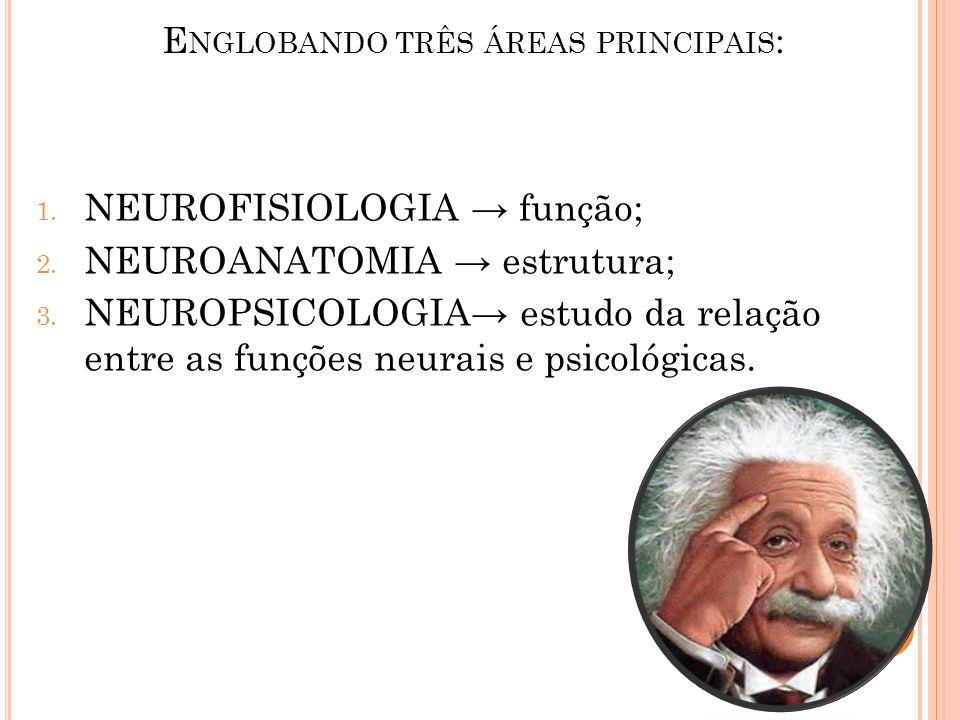 E NGLOBANDO TRÊS ÁREAS PRINCIPAIS : 1. NEUROFISIOLOGIA → função; 2. NEUROANATOMIA → estrutura; 3. NEUROPSICOLOGIA→ estudo da relação entre as funções