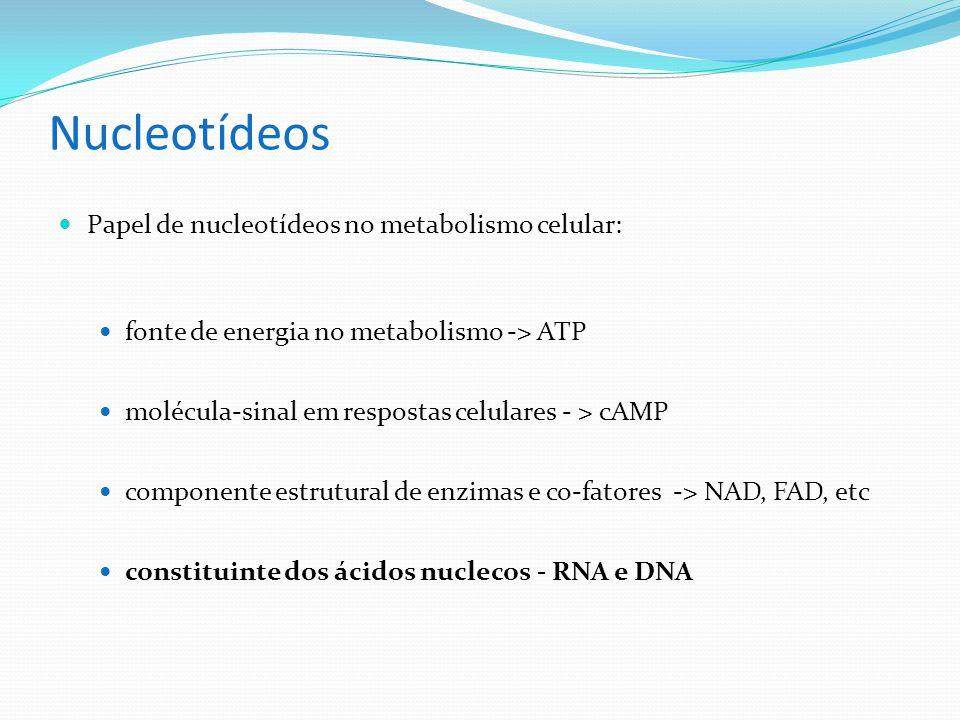 Nucleotídeos Papel de nucleotídeos no metabolismo celular: fonte de energia no metabolismo -> ATP molécula-sinal em respostas celulares - > cAMP componente estrutural de enzimas e co-fatores -> NAD, FAD, etc constituinte dos ácidos nuclecos - RNA e DNA