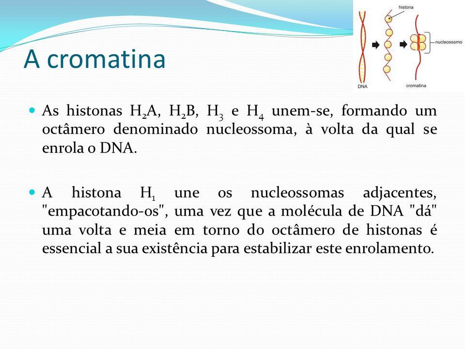 Eucromatina e Heterocromatina Conhecem-se dois tipos de cromatina: Eucromatina, que consiste em DNA ativo, ou seja, que pode-se expressar como proteínas e enzimas.