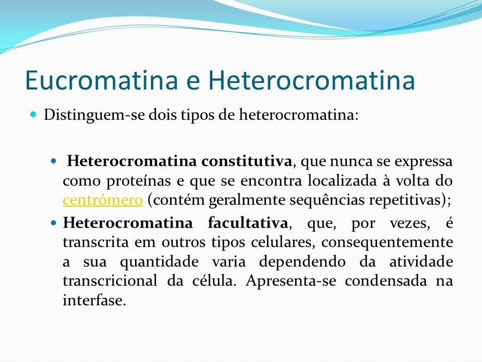 Eucromatina e Heterocromatina Funções da heterocromatina: Proteção da eucromatina contra quebras e rearranjos; Regulação do emparelhamento dos cromossomas Controlo do mecanismo de transporte ao nível dos poros nucleares; Estabilização de certas regiões cromossómicas (centrómero e telómero); Contribuição para a especiação e evolução (pela facilidade de rearranjos cromossómicos nestas zonas que conduzem à evolução dos cariótipos e pelo estabelecer de barreiras à fertilidade).