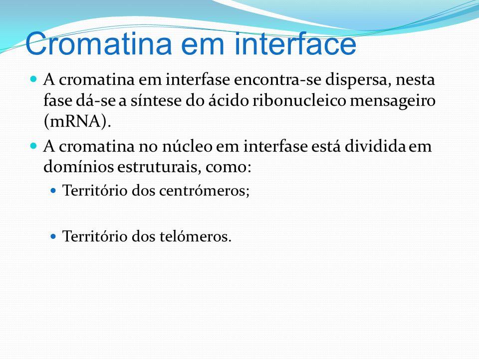 Cromatina em interface A cromatina em interfase encontra-se dispersa, nesta fase dá-se a síntese do ácido ribonucleico mensageiro (mRNA).