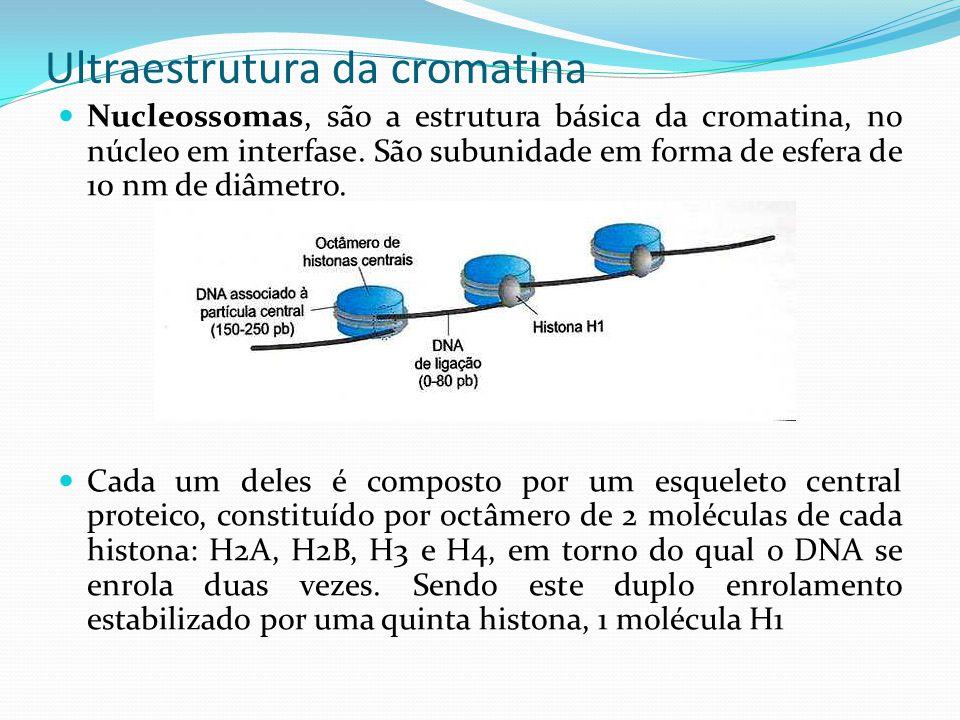 Ultraestrutura da cromatina Nucleossomas, são a estrutura básica da cromatina, no núcleo em interfase.