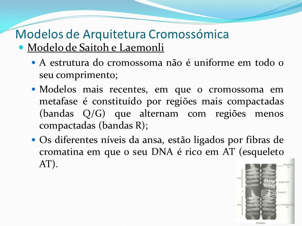 Anatomia dos cromossomas em metáfase A morfologia e número de cromossomas varia de espécie para espécie.