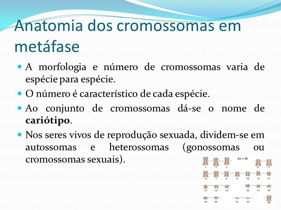 Anatomia dos cromossomas em metáfase Técnicas de marcação seletiva e diferencial permitiram a sua identificação bem como de regiões cromossómicas: Bandas Q; Bandas G (eucromatina); Bandas R (eucromatina); Bandas C (heterocromatina constitutiva); Regiões NOR.