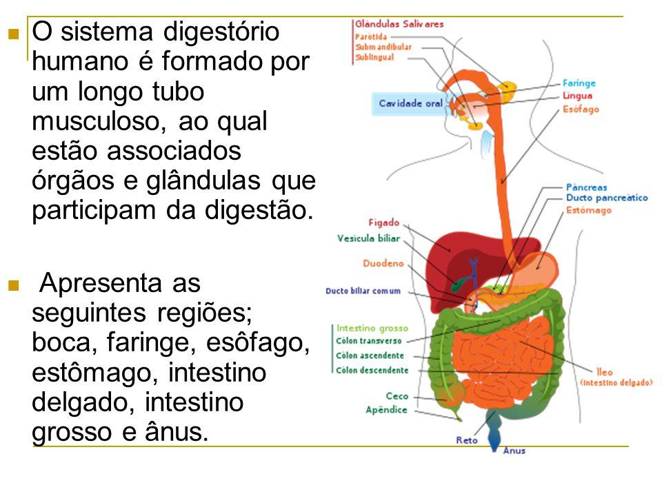 Fisiopatologias do sistema digestório Anorexia nervosa é um distúrbio alimentar resultado da preocupação exagerada com o peso corporal, que pode provocar problemas psiquiátricos graves.