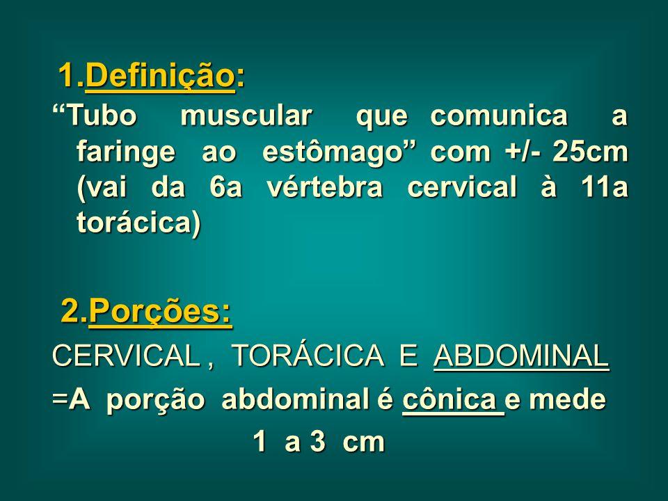"""1.Definição: Tubo muscular que comunica a faringe ao estômago"""" com +/- 25cm (vai da 6a vértebra cervical à 11a torácica) """"Tubo muscular que comunica a"""