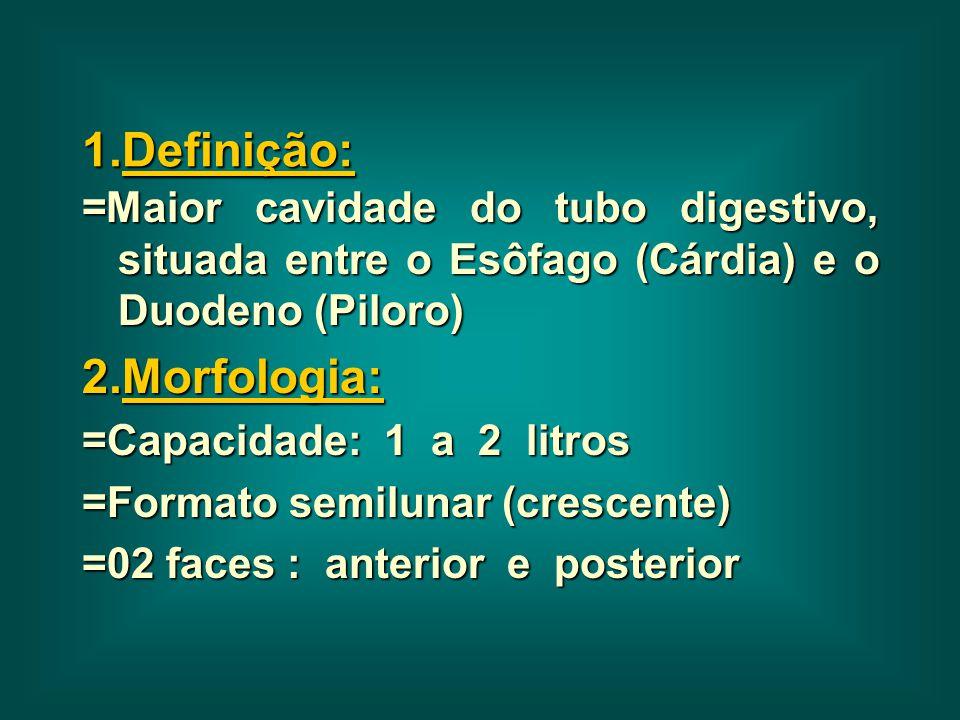 1.Definição: =Maior cavidade do tubo digestivo, situada entre o Esôfago (Cárdia) e o Duodeno (Piloro) 2.Morfologia: =Capacidade: 1 a 2 litros =Formato
