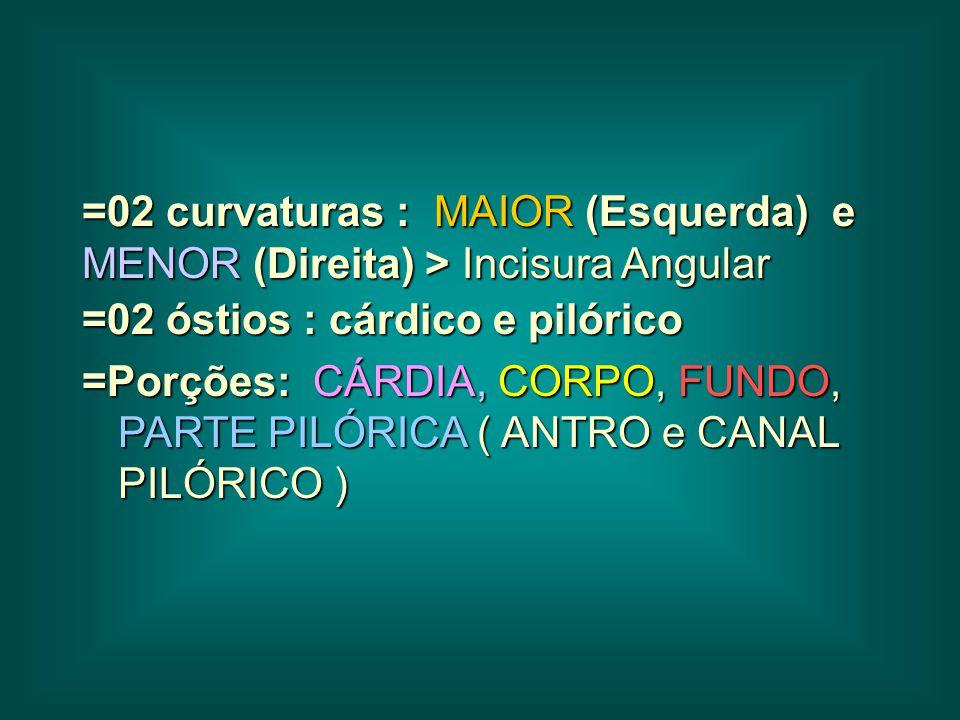 =02 curvaturas : MAIOR (Esquerda) e MENOR (Direita) > Incisura Angular =02 óstios : cárdico e pilórico =Porções: CÁRDIA, CORPO, FUNDO, PARTE PILÓRICA