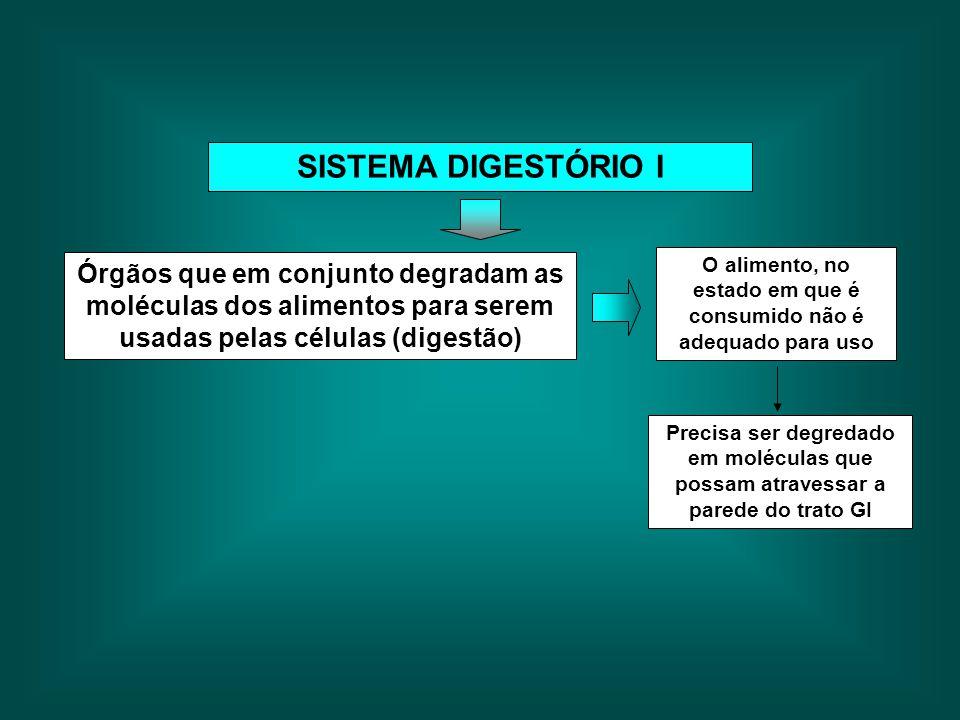 SISTEMA DIGESTÓRIO I Órgãos que em conjunto degradam as moléculas dos alimentos para serem usadas pelas células (digestão) O alimento, no estado em qu