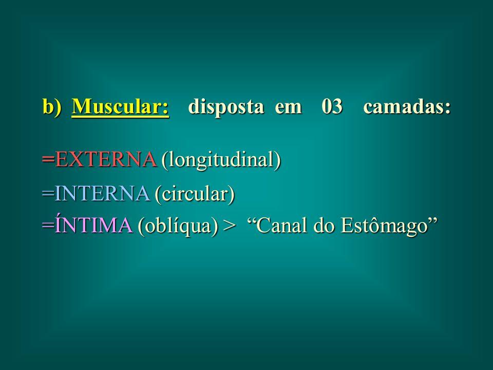 """b) Muscular: disposta em 03 camadas: =EXTERNA (longitudinal) =INTERNA (circular) =ÍNTIMA (oblíqua) > """"Canal do Estômago"""""""