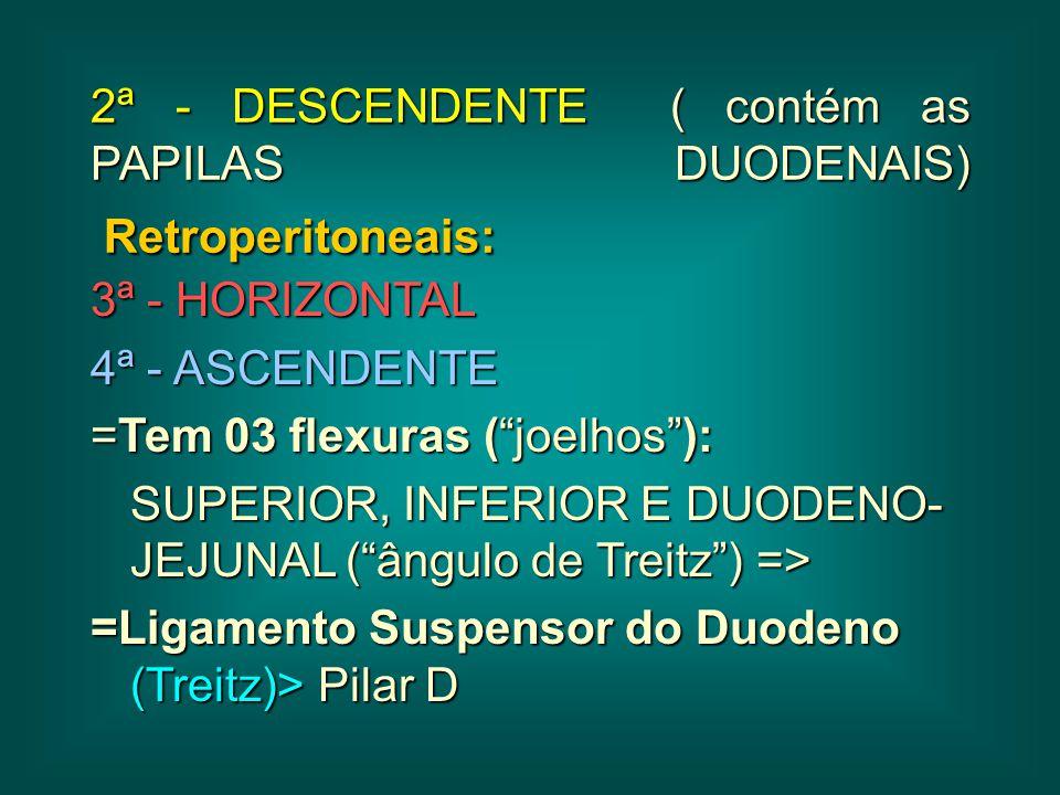 """2ª - DESCENDENTE ( contém as PAPILAS DUODENAIS) Retroperitoneais: 3ª - HORIZONTAL 4ª - ASCENDENTE =Tem 03 flexuras (""""joelhos""""): SUPERIOR, INFERIOR E D"""