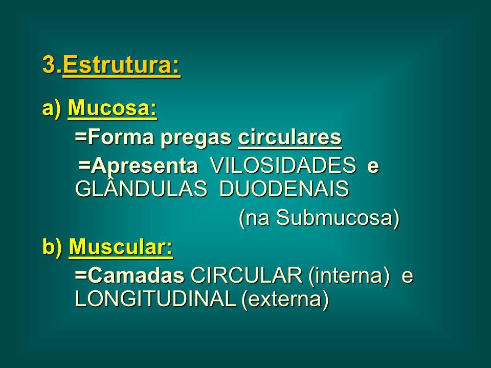 3.Estrutura: a) Mucosa: =Forma pregas circulares =Apresenta VILOSIDADES e GLÂNDULAS DUODENAIS =Apresenta VILOSIDADES e GLÂNDULAS DUODENAIS (na Submuco