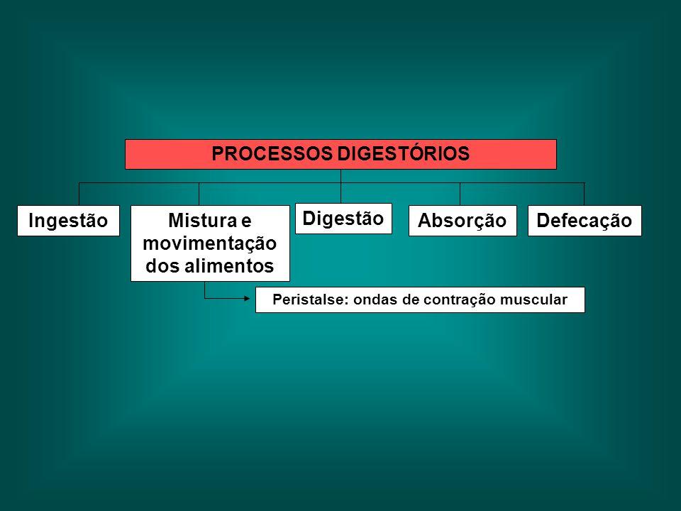 PROCESSOS DIGESTÓRIOS Ingestão Digestão DefecaçãoMistura e movimentação dos alimentos Absorção Peristalse: ondas de contração muscular