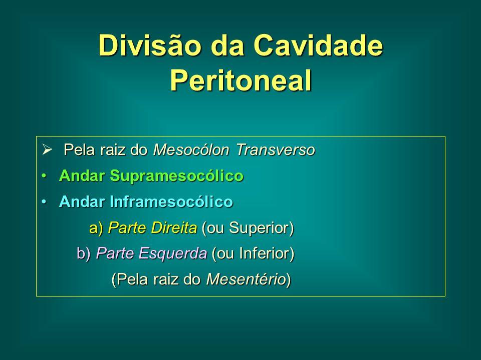 Divisão da Cavidade Peritoneal Pela raiz do Mesocólon Transverso  Pela raiz do Mesocólon Transverso Andar SupramesocólicoAndar Supramesocólico Andar